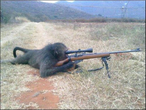 baboonfantry