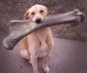 dogwithbigbone