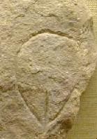 paleopussy