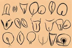 paleopussylinedrawings