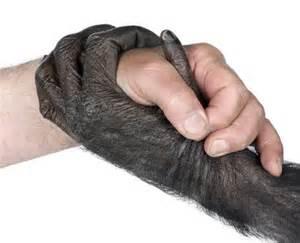 chimphumanhand