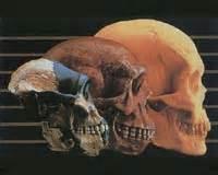humanevo2