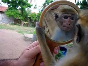 monkeyinmirror