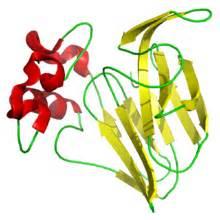 thaunatinewineprotein